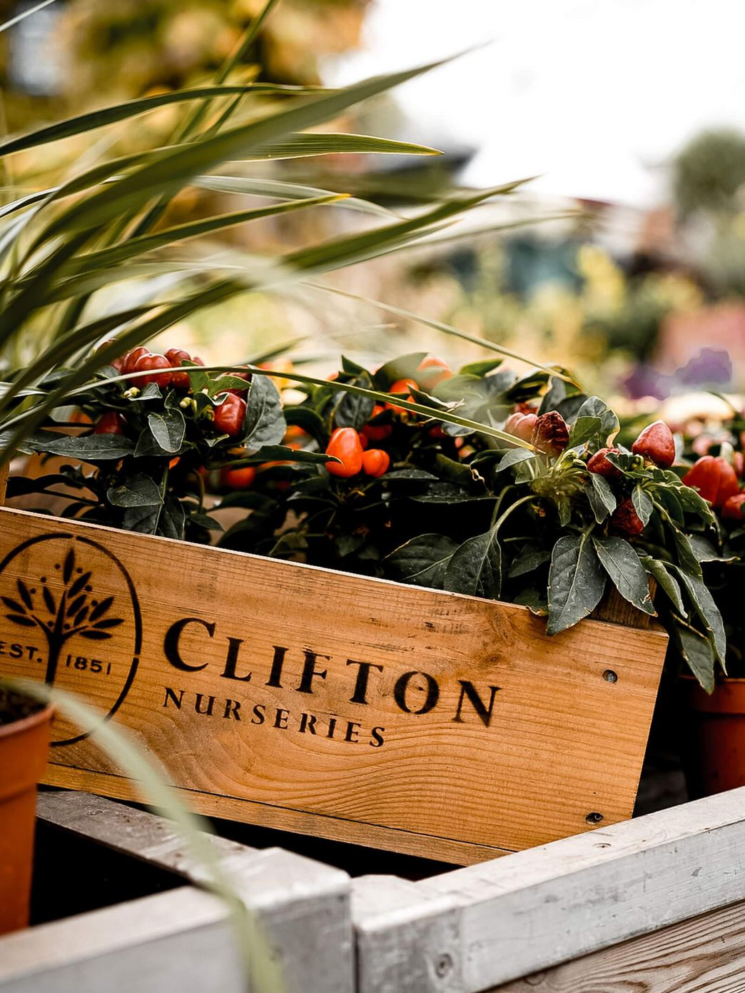 Clifton Nurseries London