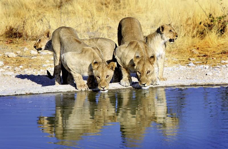 Namibia Rundreise: Rund um die Natur, Namibia, Windhoek, Bild 1