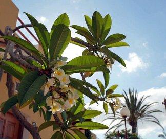 Hotel Bungalows Parque Bali, Spanien, Gran Canaria, Maspalomas, Bild 1
